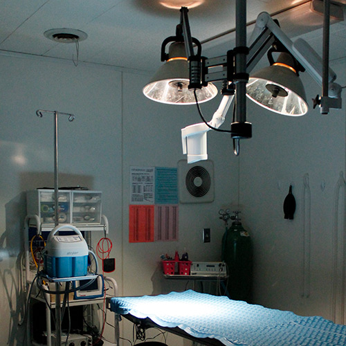 surgical room at vet clinic